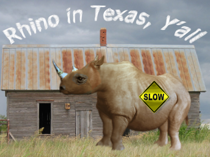 Rhino in Texas